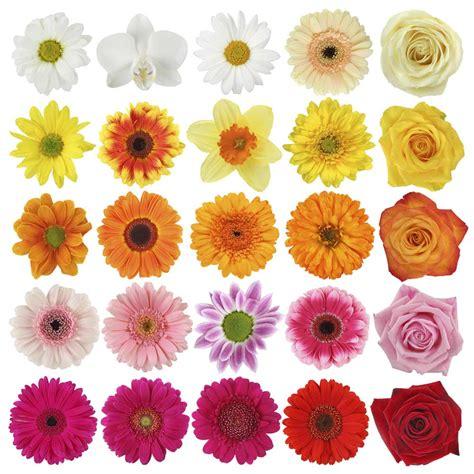 Len Zu Verschenken by Welche Blumen Zum Valentinstag Verschenken