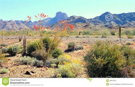 Landscape Rock Yuma Az Desert Scenic Panorama Stock Photo Image 38870378