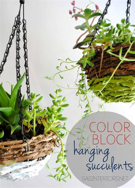 color block hanging succulents easy diy burger