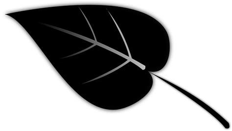 Narcisuss Hitam leaf plant silhouette 183 free vector graphic on pixabay