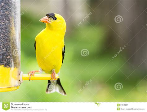 diy yellow finch bird house plans pdf download woodworking