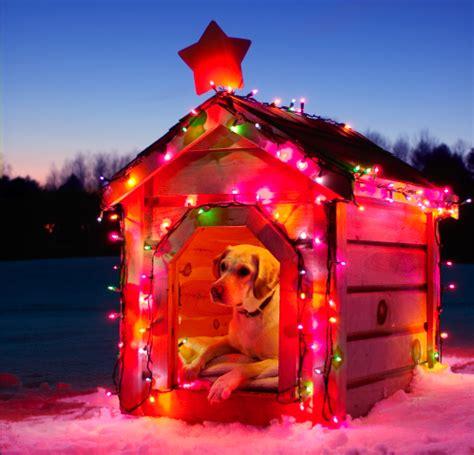 christmas dog house christmas dog house