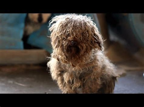 180+ animals rescued from arkansas puppy mill youtube