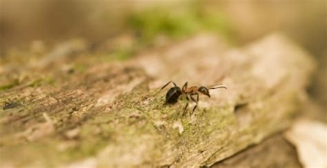 how to get rid of ants in your house how to get rid of ants in your home