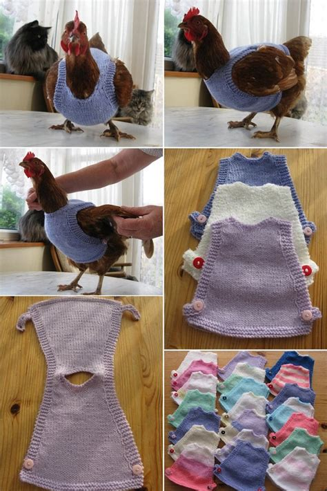 diy cat clothes diy chicken sweaters icreatived