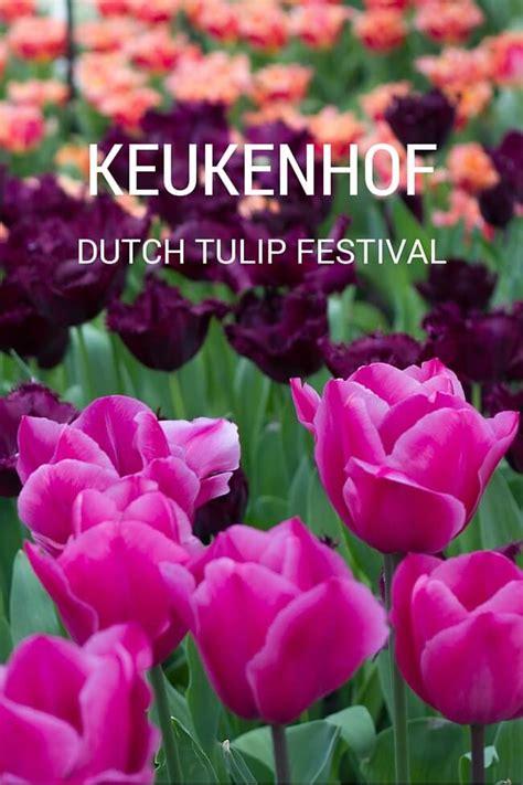 keukenhof  amsterdams tulip flower festival