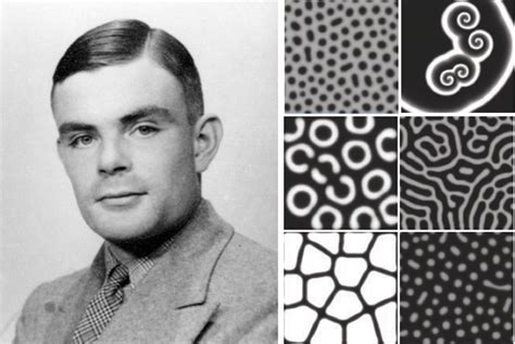 turing pattern in nature alan turing s patterns in nature and beyond wired
