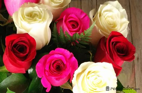 imagenes rosas amarillas rojas ramo de rosas rojas rosas y blancas en regalador com