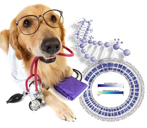dogs dna methylome uncovers hints  human cancer metastasis mapping ignorance