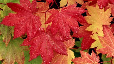 download wallpaper daun gambar gambar daun yang alami dan sangat indah