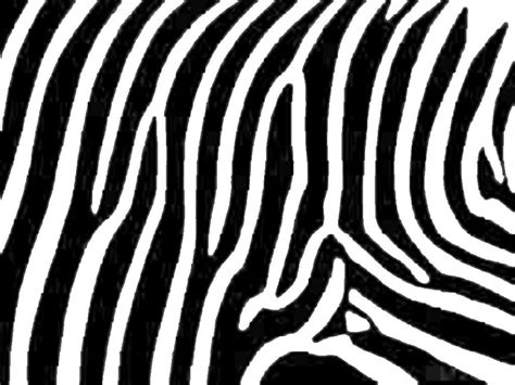 zebra print the animal