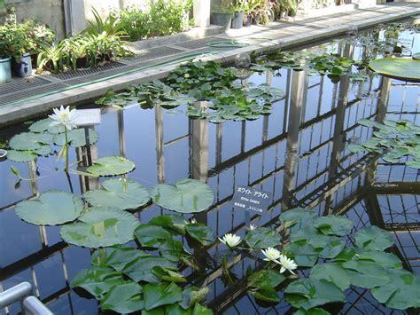 botanical garden japan hiroshima botanical garden next stop japan