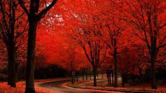 17 red autumn road tree scenic fall rede of hd wallpaper