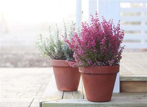 Im September Garten Winterfest Machen by Pflanzen 252 Berwintern Tipps F 252 R Die Kalte Jahreszeit