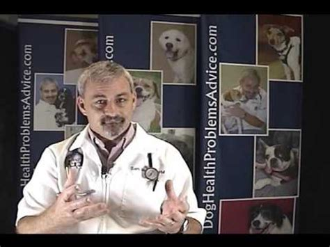 pug honking cough tracheal collapse in dogs funnydog tv