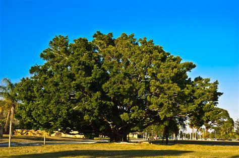 bodhi tree louis dallara photography