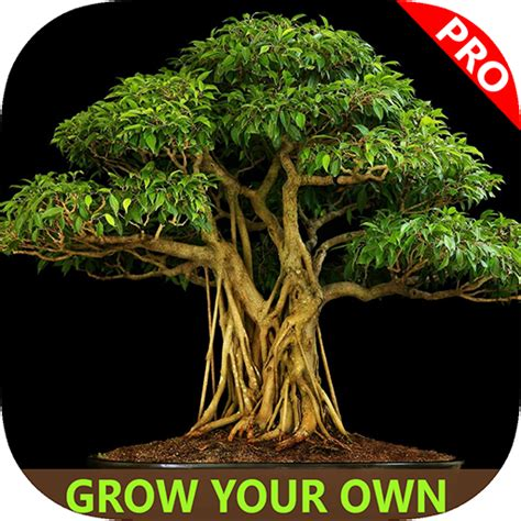 easy bonsai tree for beginners best how to