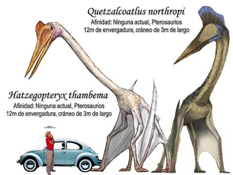 quetzalcoatlus wikipedia the free encyclopedia 20 best images about quetzalcoatlus on pinterest glow