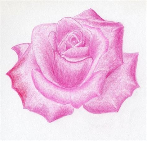 Pink Sketches by Awesome Drawings The Wondrous Pics