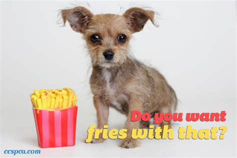 puppy captions puppy caption fries with that central california spca fresno ca