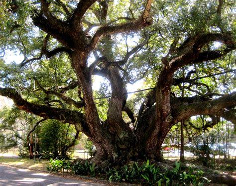 live in mobile duffie oak