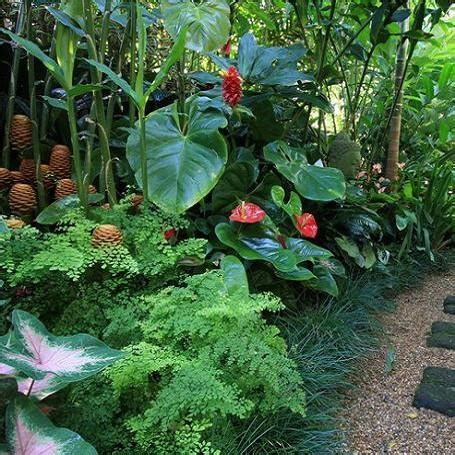 17 best images about plants on gardens tropical tropical garden design ideas your staycation oasis