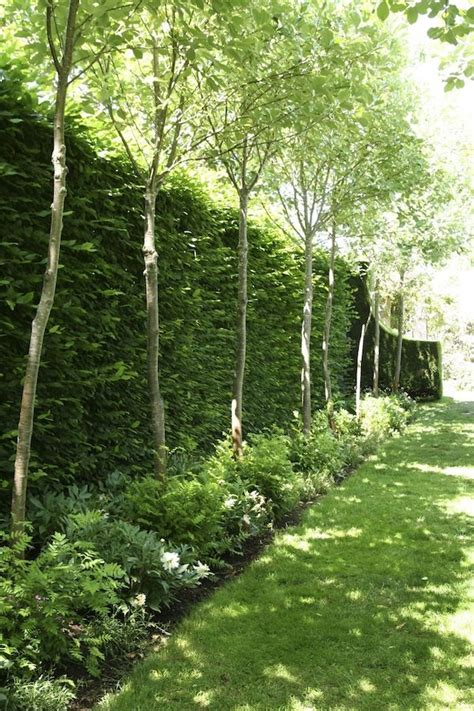 best plants for backyard privacy best 25 privacy trees ideas on pinterest privacy