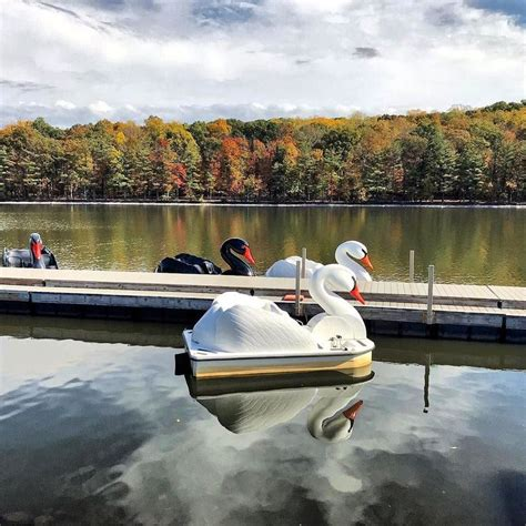 swan boats near turtle back zoo 1150 best writing jersey life images on pinterest a
