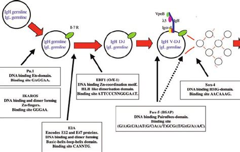 Diagram dna transcription choice image how to guide and kotaksurat schematic diagram of dna transcription choice image how ccuart Images
