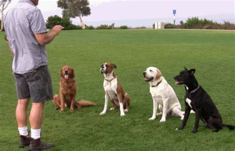 how dogs are trained course offerings the animal den
