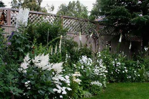 white cottage garden flowers lavender garden cottage 15 blooms for a white garden