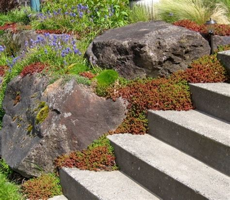 303 Best Images About Rock Gardens Ground Covers On Rock Garden Seattle