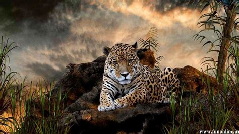 jaguar wallpapers wallpaper cave