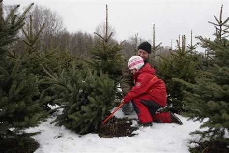 where to cut your own christmas tree in west michigan