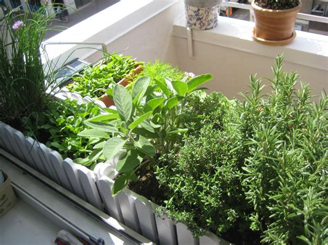 kitchen gardening ideas balcony kitchen gardening ideas for limited space blog nurserylive com gardening in india