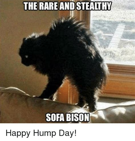 Happy Hump Day Memes - 25 best memes about hump day hump day memes