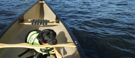 captain marney s boat rental summertime is for paddling go cottage