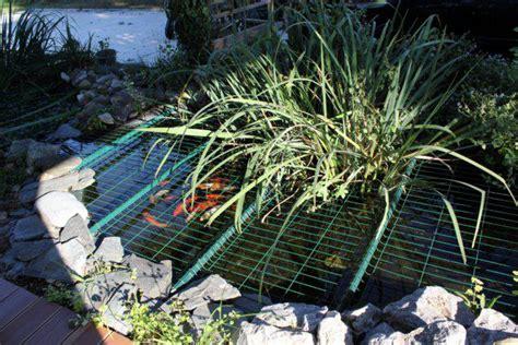 protection pour bassin de jardin le forum de bassin bassin de jardin baignade naturelle technique plantes aquatiques