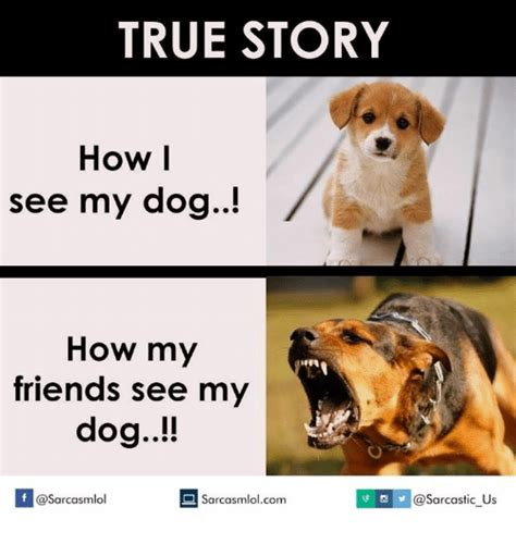 How I See Meme - true story how i see my dog how my friends see my dog if v us sarcasmlolcom dog meme on me me