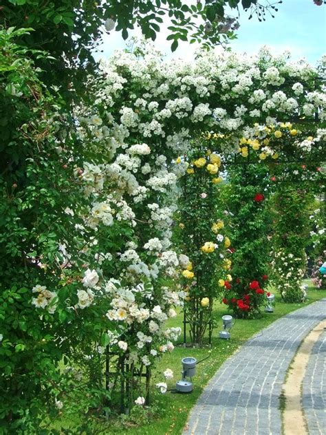 Garden Trellis Images Climbing Roses Flowers And Gardens Pinterest Gardens