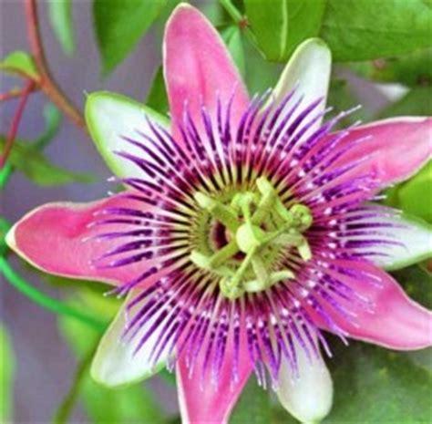 elenco fiori e piante dalla a alla z il significato e la simbologia dei fiori dalla m alla z