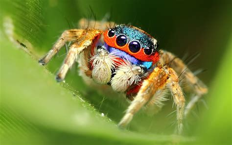 Cute Spider Wallpaper   WallpaperSafari
