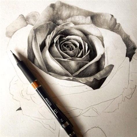 tattoo pen rose black and white rose sketch art pencil pen drawing