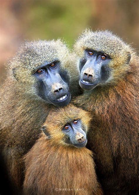 Maianan Animal Kingdom innate of majestic wildlife creatures