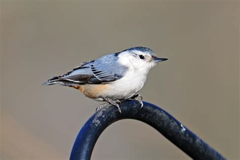 bird identification by color bird identification by color
