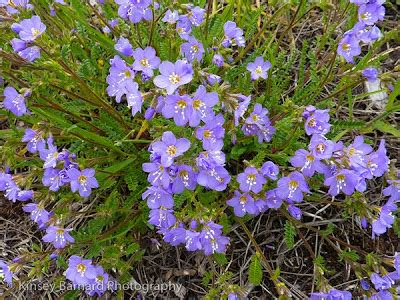 molly montana's montana moments: montana wildflowers in june
