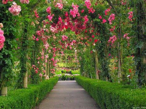 fiori per esterno fiori da esterno fiori per cerimonie come scegliere i