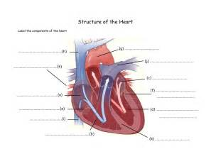 Tag structure human heart diagram archives human anatomy charts