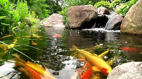 backyard koi ponds york lancaster harrisburg pa backyard koi fish ponds waterfalls and fountains
