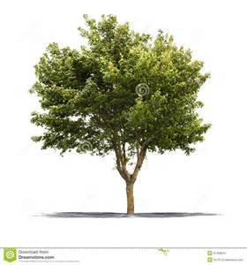 white and green tree green tree on a white background stock photo image 31499210